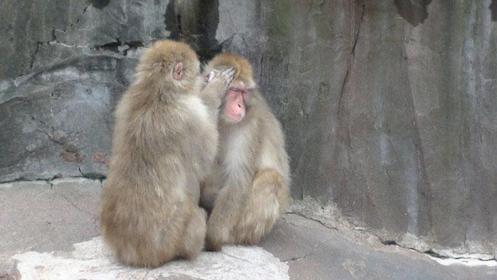 釧路市。釧路動物園