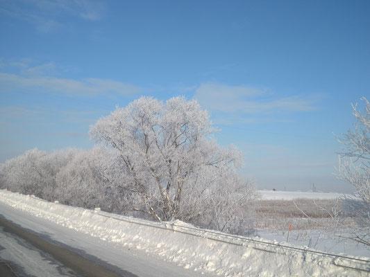 北広島市。道央でも真冬は氷点下20度以下になることも。条件が合うと樹氷が見られます