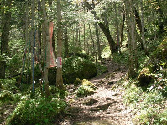 遠軽町。山彦の滝へ向かう山道