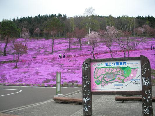 滝上町。芝桜