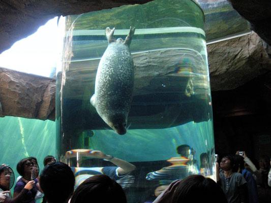 旭川市。旭山動物園