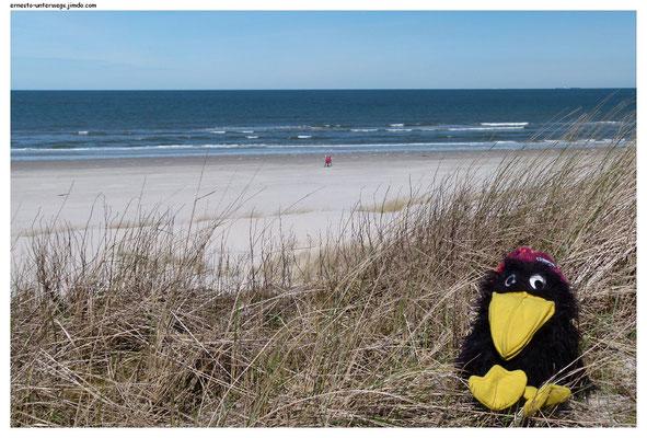 Zum ersten Mal am Spiekerooger Strand!
