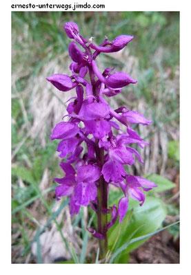 Irgendeine Orchidee
