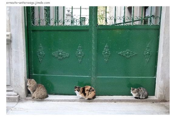 Stadt der Katzen