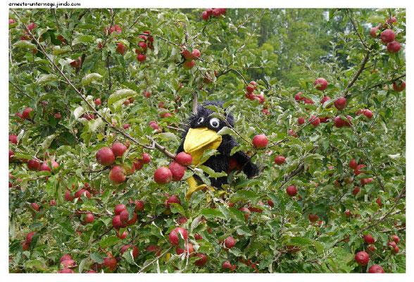 Viele Menschen haben Obstbäume im Garten,