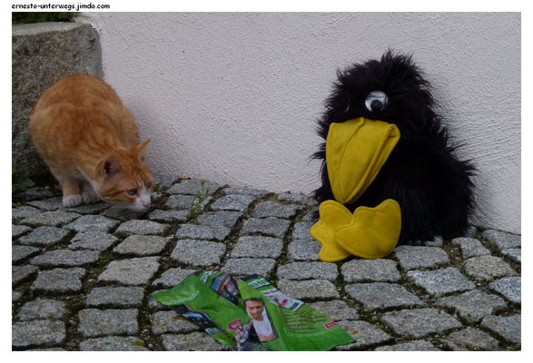 Bayerische Katze