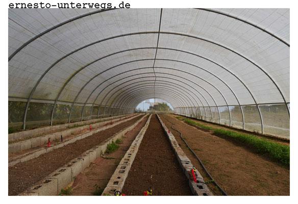 Hier werden die Samen im Spätsommer ausgesät, gehegt und gepflegt, damit sie keimen. Nach etwa 100 Tagen sind die Setzlinge ca. 15cm hoch und sind bereit für die Felder.