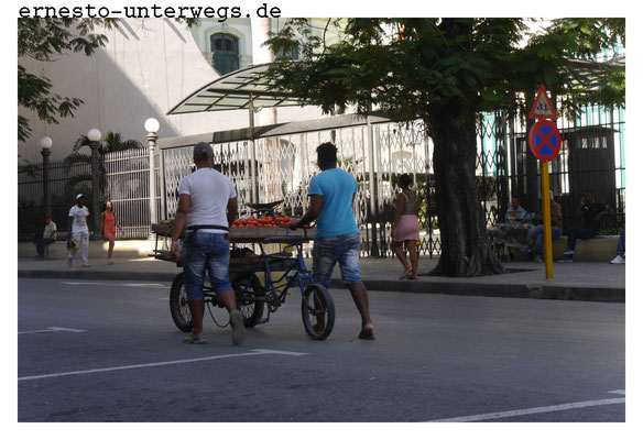 Angeblich kann sich Havanna durch urban gardening selbst versorgen.