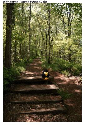 Weicher Waldboden - ich musste auf der befestigten Stufe sitzen, sonst wäre ich zu weit eingesunken für das Foto.