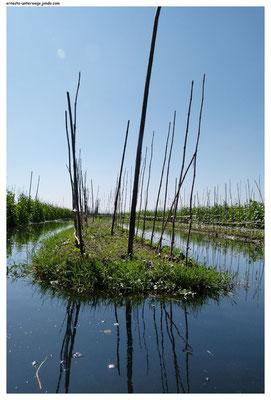Eine der langgezogenen Anbauinseln. Im Kanal dazwischen fahren die Bauern mit dem Boot entlang um die Felder vom Boot aus zu bearbeiten.