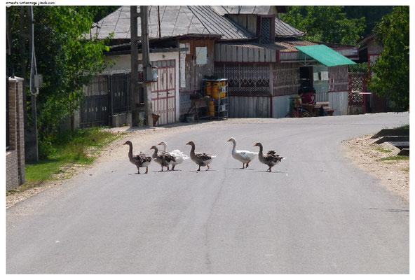Vor dem Hintergrund der Selbstversorgung halten sich viele Dorfbewohner einige kleine Nutztiere.