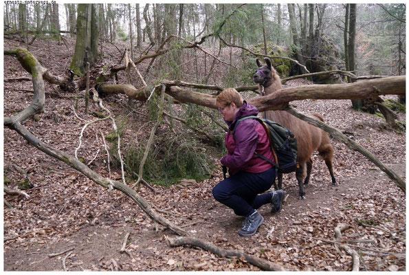 Xenia zeigt Sonny, wie man mit dem Hindernis umgeht.
