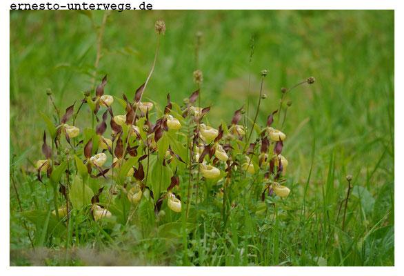 ...gesellen sich noch andere wertvolle Orchideenarten dazu.