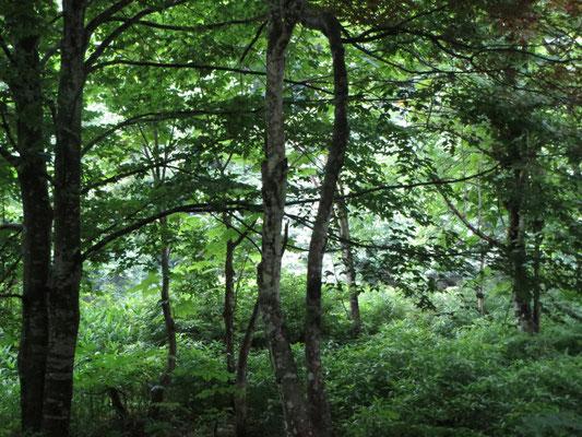 森の奥ふかくにキャンドルやさんがあります。いい感じ。