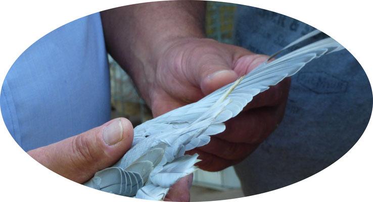 Vol d'une tachetée bicolore blanc gris