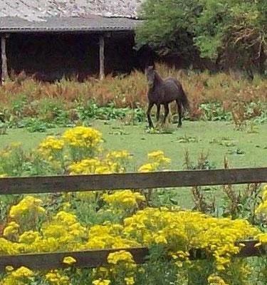 Pferde auf JKK-Wiese: Ein Fall für das Veterinäramt