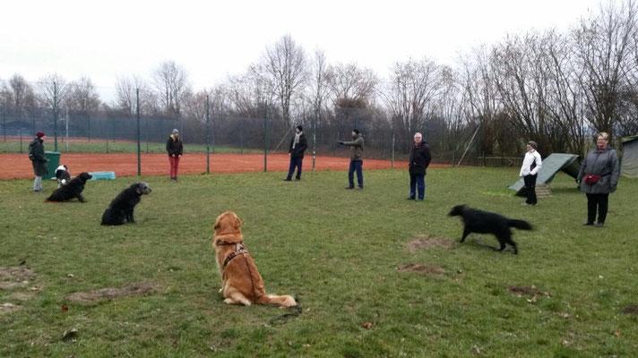 Die Hunde bilden eine Gasse mit Ihren Haltern und ein Hund wird durch die Gasse abgerufen.