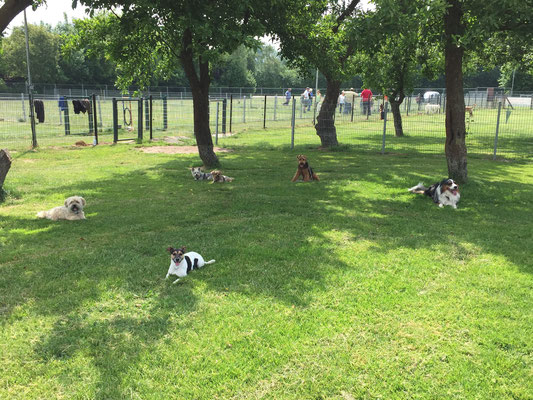Wenn es den Hunden zu warm ist, werden die Übungen halt im Schatten gemacht.