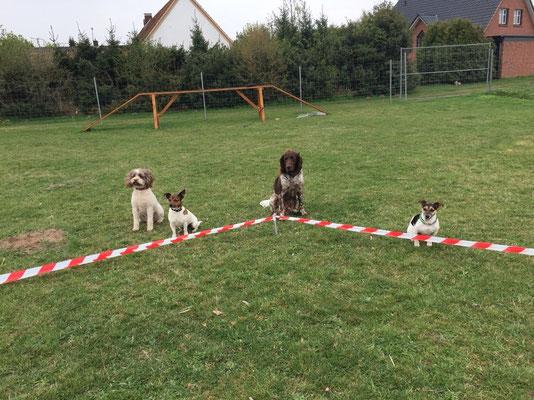 Mit vier Hunden am Longierkreisel.