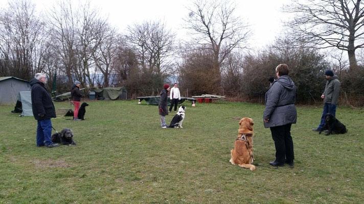 ...danach wird der Hund in die Mitte gesetzt, erst Sccop...
