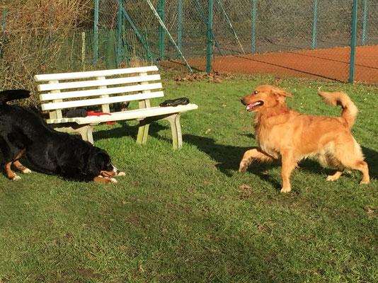 Bella und Fynn haben sich gesucht und gefunden und hatten ordentlich Spaß beim Spielen.