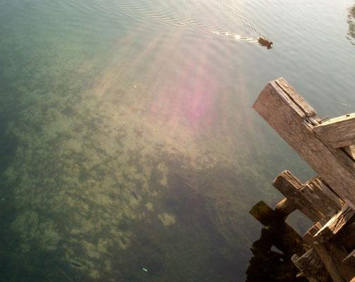 Und auch das muss sein, Chronistenpflicht!! Fische unter der Holzbrücke. Ihr könnt die kaum sehen - Martin hats sofort erfasst. Für ihn steht hier dieses Foto im Netz. (Foto: Frank Butschbacher)