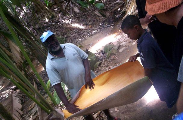Visita guidata alla Vallee de Mai, Seychelles