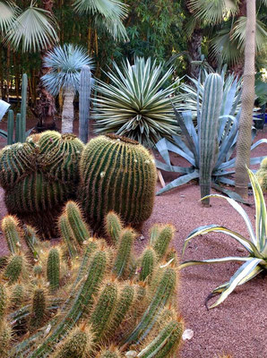 Cacti at the Jardins Majorelle, Marrakech