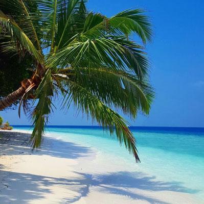 Postcard-perfect beaches in the Maldives. Dante Harker