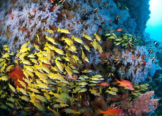 Colourful reefs galore near Dharavandhoo Island in the Maldives. Dante Harker