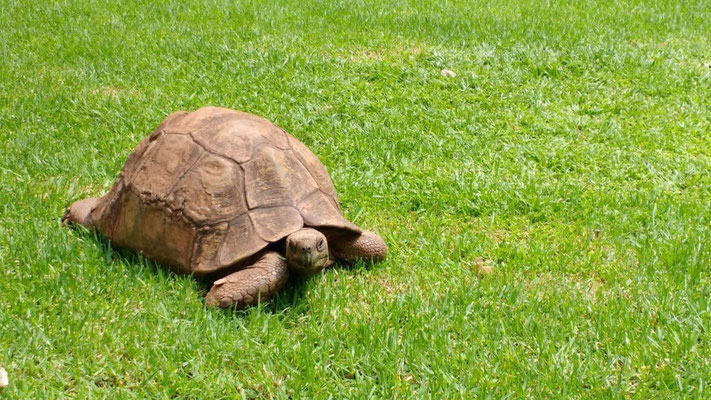 Villa Simonne in Johannesburg also has a few resident tortoises roaming their ample gardens. Dante Harker