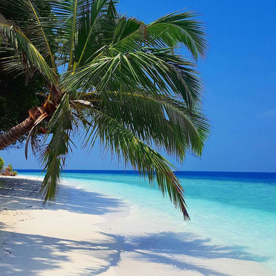 A picture from the stunning desert island Dhavandhoo in the Maldives