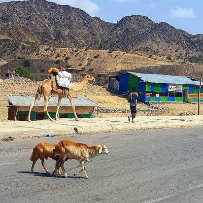 Camels on the way up to Urta Ally Ethiopia - Dante Harker