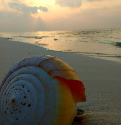 Sunsets and shells on Dharavandhoo Island in the Maldives. Dante Harker