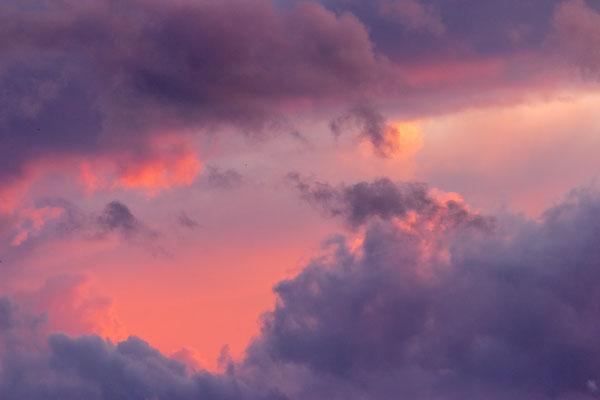Zuckerwatte der Natur, in orange, violett und pink