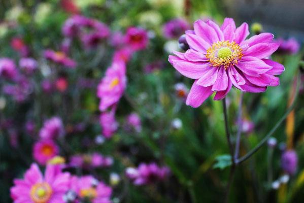 ©2012 www.maikeb.com