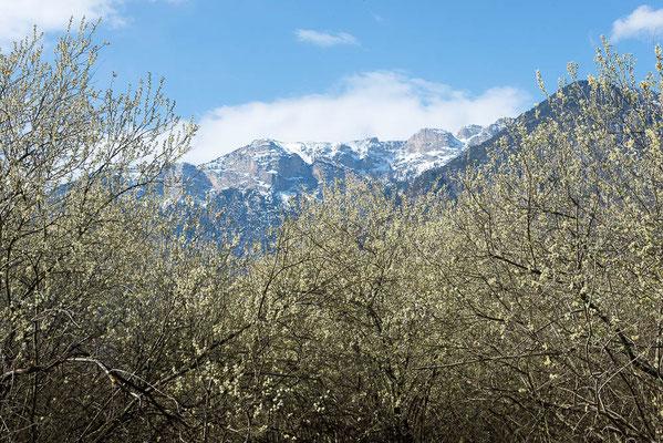 Im Tal blüht es, am Berg glitzert noch der Schnee.
