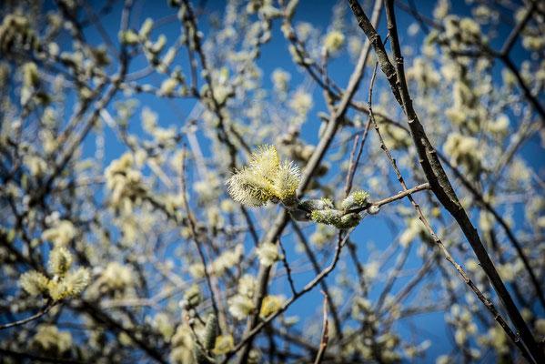 Die ersten Blüten kündigen den nahenden Frühling an.