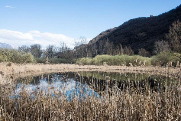 Ein Teich im Biotop im Schilfgürtel des Kalterer Sees.