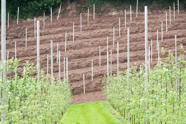 Im Vordergrund die Apfelbäume, dahinter der für die Rebpflanzung bereitete Boden.