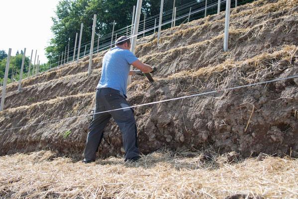 Vor dem Auspflanzen der Pfropfreben müssen mit einer Art Lanze die Pflanzlöcher von Hand aufgemacht werden.