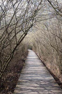 Wunderbare Wanderung: Steg durch den Schilfgürtel am Südufer des Kalterer Sees.