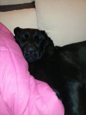 Chocololate, donante de Greta en su casa de adopción