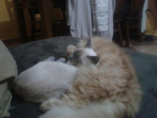 La almohada de KIRA