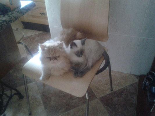 KIRA con su hermano PELUDÍN