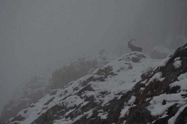 Silhouette dans la brume - F.Bernier