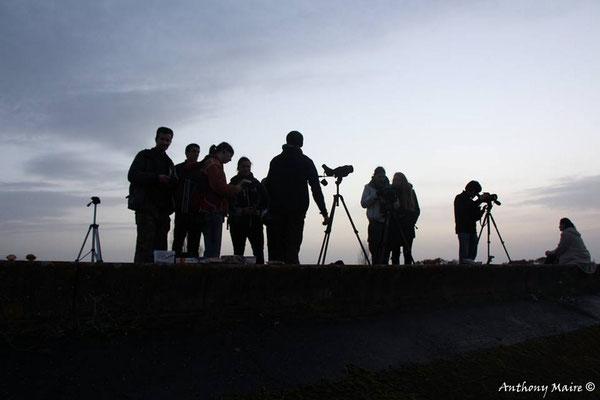 Observation à la tombée du jour - 2014 - A.Maire