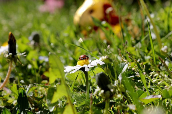 Biodiversité du campus - G.Boutet