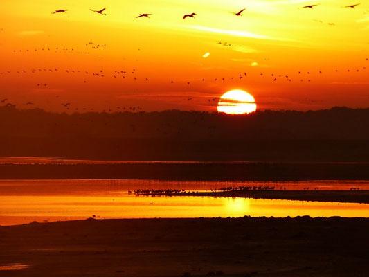 Lever de soleil - 2012 - E.Colliat