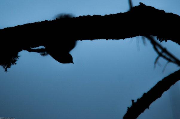 Silhouette matinale - N.Burgarella